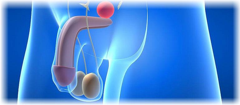 vliyanie-tsifrana-na-spermatozoidi